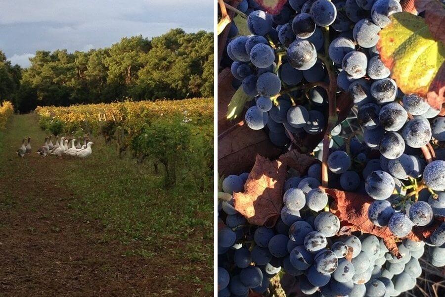 Le vin nature dans le monde