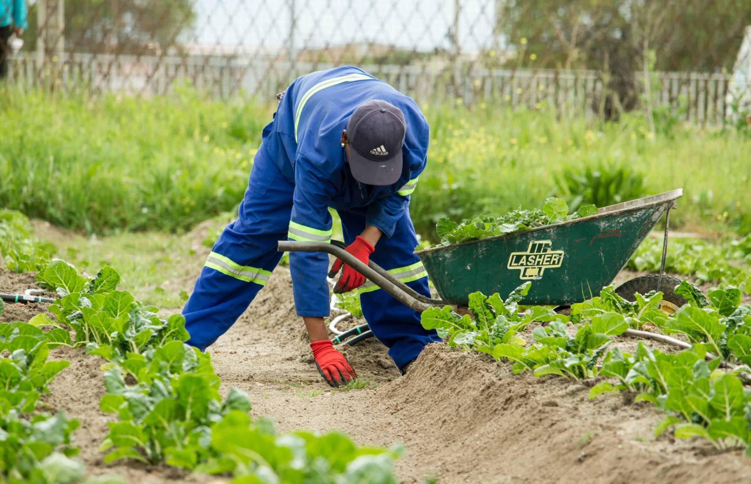 Agriculteur champs confinement