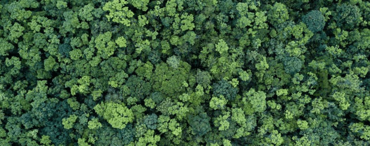 La Terre en vert