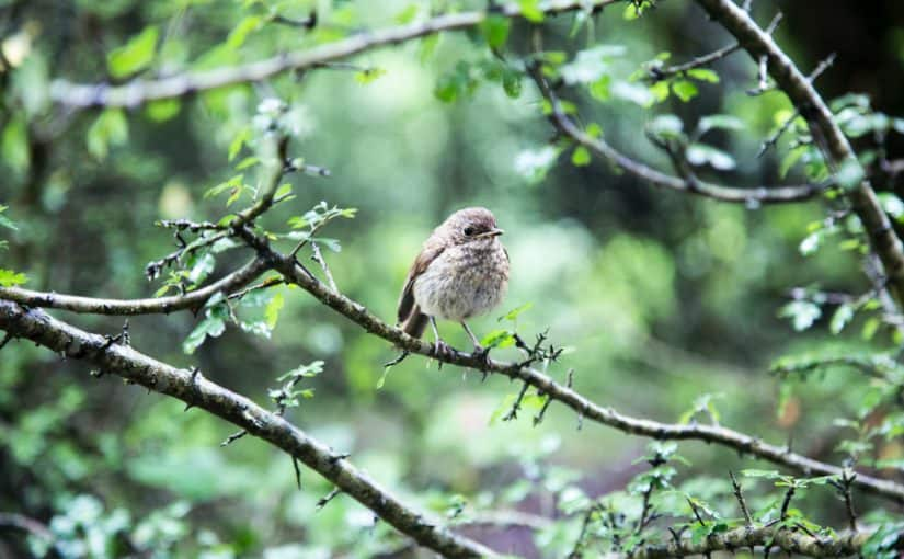 Oiseau nature