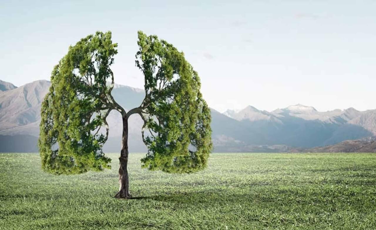 Arbre nature poumons