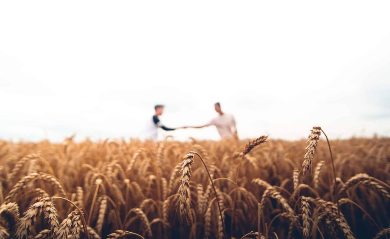 champs agriculture solidarité
