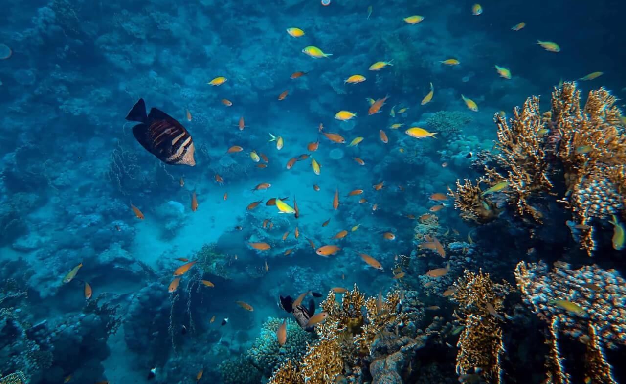 castalie et ethic ocean