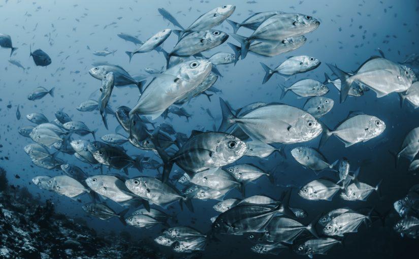 peche durable ethic ocean