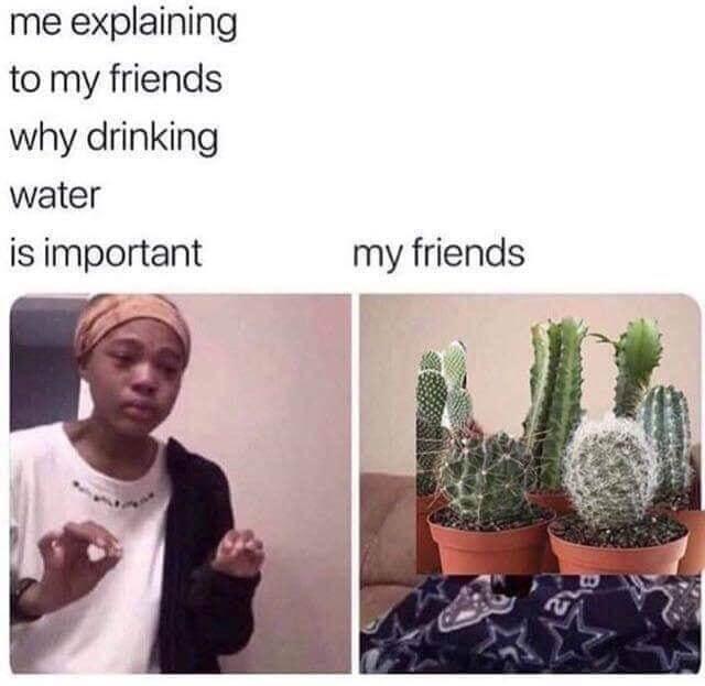 cactus et eau