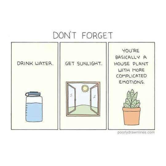 eau et plantes