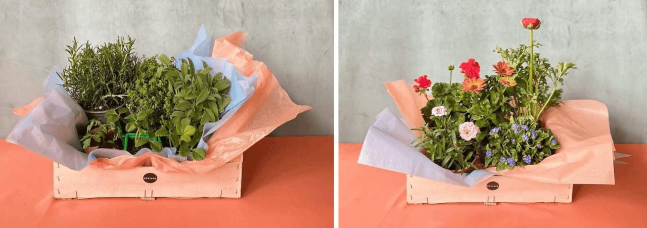 desiree-fleurs-livraison